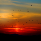 Hintergrundbild - Vögel im Sonnenuntergang